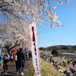 柴田さくらマラソン2019