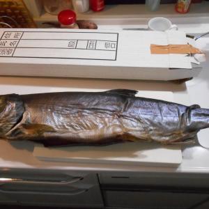新巻鮭解体