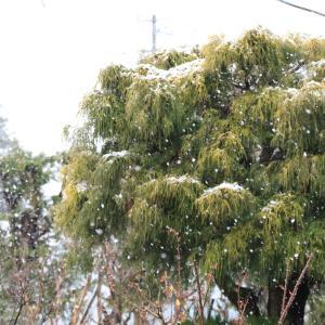 今朝の我が家、ビックリポンの雪景色