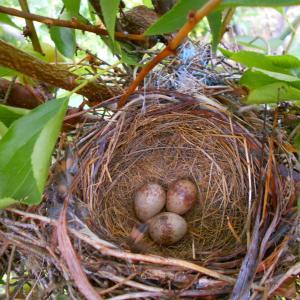 先日の卵が孵化してました。