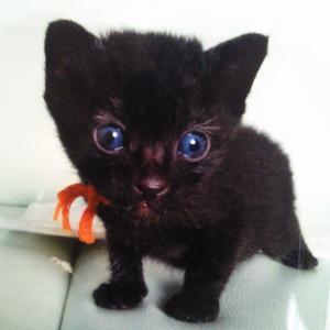 黒ネコのタンゴ…