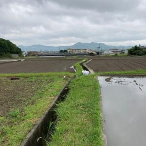 今週も田植えです。