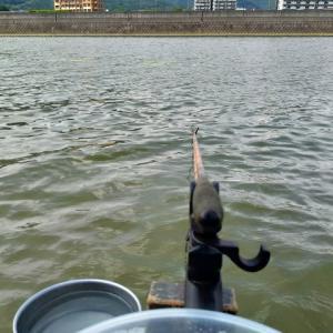 午後から竹馬川でヘラブナ釣り