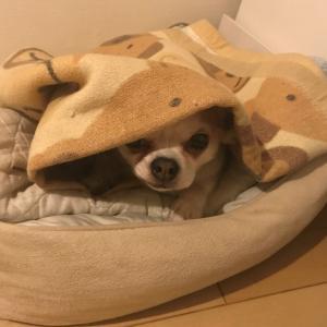 僧帽弁閉鎖不全の愛犬