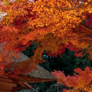 (都心から1時間以内!!)絶対に見に行きたくなる東京の紅葉スポット