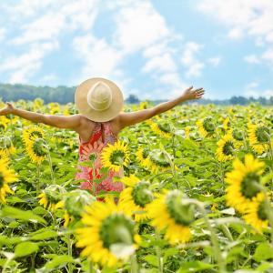 明日から太陽獅子座シーズン~自分らしくあること、自分を表現すること