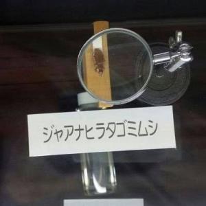 川崎市がヘイトに当たる言葉を公表「祖国へ帰れ」「昆虫に例える」等々
