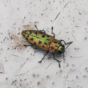 【写真🐜】めちゃくちゃ綺麗な虫見つけたから見てほしい