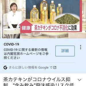 【速報】やっぱりコロナには緑茶が効くことが判明ww