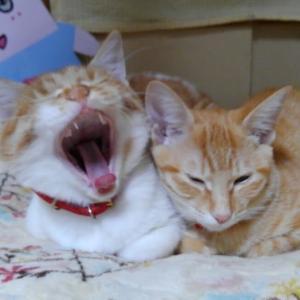 あ~眠い・・・
