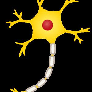 ベンチプレス 神経系トレーニングって何?