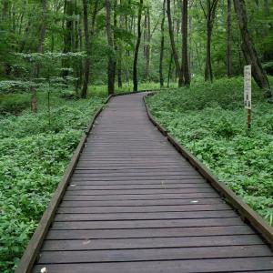 ウォーキングコース 上質な雑木林と整備された散策路が楽しめる都立小宮公園