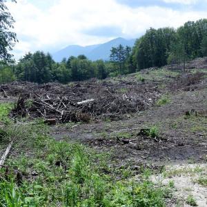 週末田舎暮らし バードフィーダー設置、白州の生き物、林の伐採