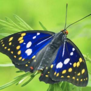 昆虫好きにはたまらない 里山も楽しめるオオムラサキセンター