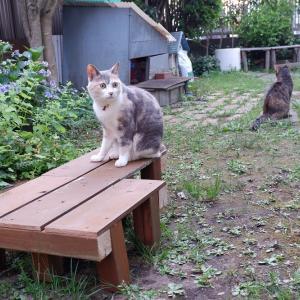 我が家の猫の大好きな場所 廃材は大事な資源 3時間で猫用デッキを作成してみた!!
