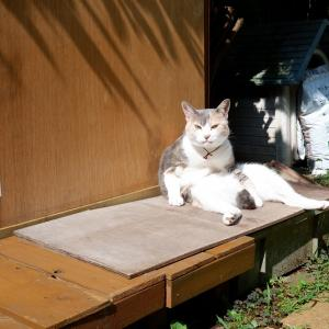 猫たちが大好きな 我が家の庭 家の周りを監視したり、遊んだり、くつろいだり・・そして生活の場でもある庭です。