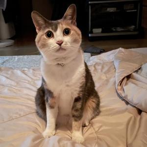 先輩猫に遠慮する猫 もっとくつろいでいいよ!! 居間でいる場所がない!、トイレは使わず! 寝るときは喧嘩!