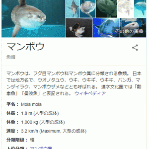 彡(^)(^)「マンボウは雑魚!www」マンボウ「あ?(イラッ)」