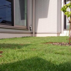 芝生の省力的な管理方法を考える