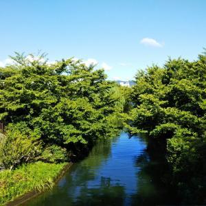 伏見港公園~ねこの散歩道