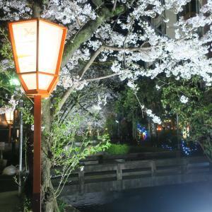 木屋町通りの夜桜