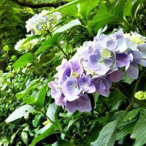 スイーツとお花の長谷寺へ