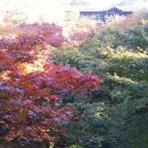 紅葉狩り~東福寺