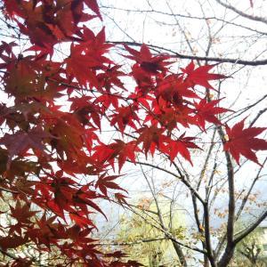 紅葉と霜月の満月