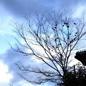 冬の木と今日のおやつ