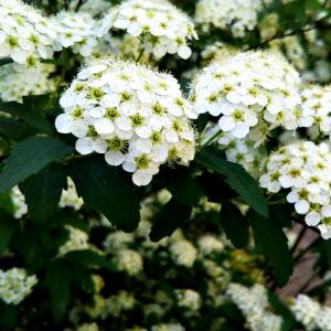 四季のお花と断捨離