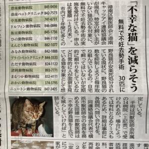 猫の無料不妊去勢手術