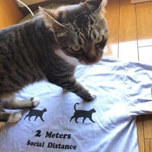 猫から猫へ新型コロナ