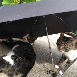 梅雨の中休み