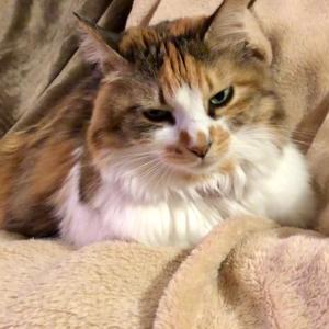 猫の新型コロナウイルス感染の新たな情報