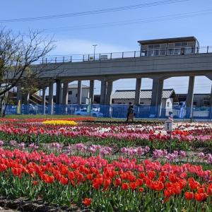 ~桜だけじゃない~地元住民が大切に育てた春の花(高知県香南市)