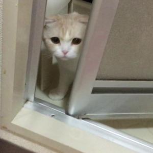 扉をあけて