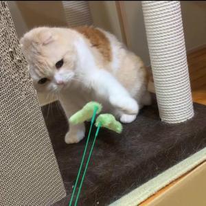 今日も猫じゃらしで遊んじゃおう!!