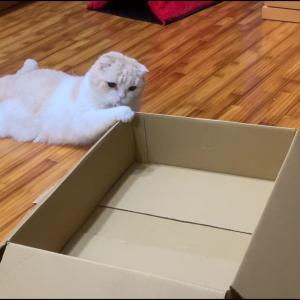 華麗なダンボール箱さばき