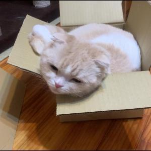 小さな箱がお気に入り