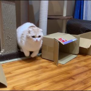エンドレス猫じゃらし