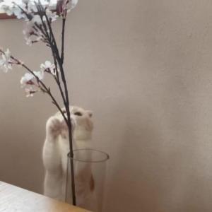 GWにナッツとお花見