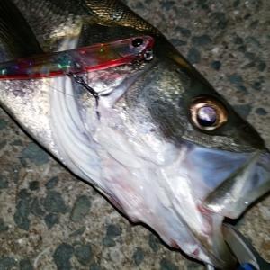 魚に近いもの程気をかけろーブルーフックとの出会いと別れ編ー