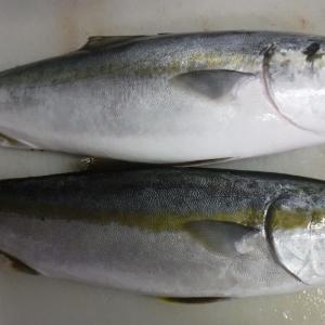 基本的な魚の処理ー丸の状態から3枚卸しまで編ー