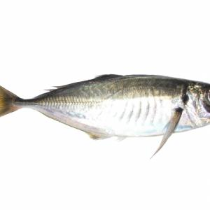 アジングで最初の1匹を釣るためのサイト