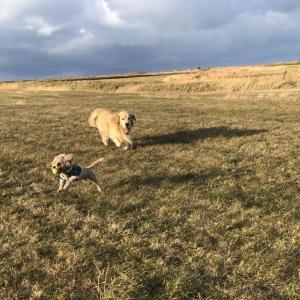ボールをとってこさせようと 犬に訓練しています  根室半島 北海道