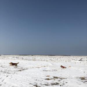 雪が積もらないので寂しい。除雪せずにすむのは嬉しいのですが。 根室半島 北海道