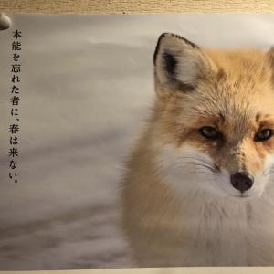 「本能を忘れた者に、春は来ない」 このコピー最高! JR花咲線 根室 北海道