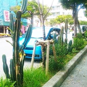植物が「緑色」であり続ける理由
