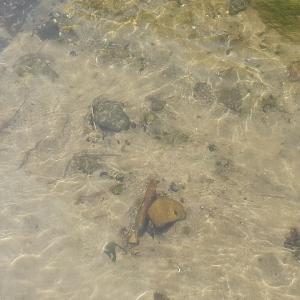 水路調査からの秋タナゴ釣り