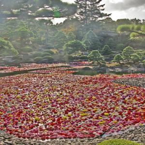 由志園 ダリアの浮かぶ池
